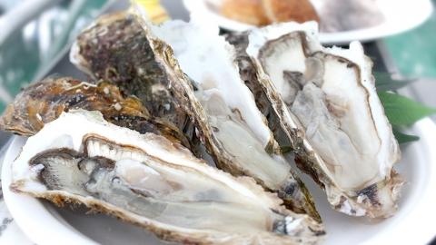 前の記事: 牡蠣は「海のミルク」なぜ?